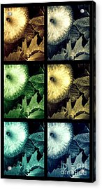 Stone Apples Acrylic Print by France Laliberte
