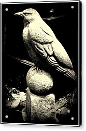Stone Crow On Stone Ball Acrylic Print by Kathy Barney