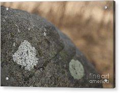 Stone Acrylic Print by Graham Foulkes
