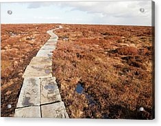 Stone Path Over Peatland Acrylic Print