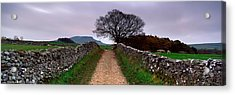 Stone Walls Along A Path, Yorkshire Acrylic Print by Panoramic Images