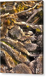 Stones And Roots Acrylic Print by Alex Wrenn