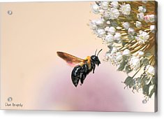 Stop And Smell The Flowers Acrylic Print by Dave Hrusecky