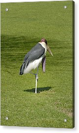 Acrylic Print featuring the photograph Stork by Charles Beeler