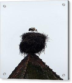 Stork Acrylic Print