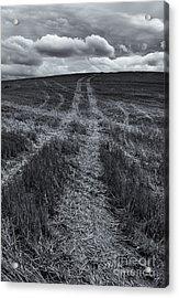 Storm Tracks Acrylic Print by Mike  Dawson