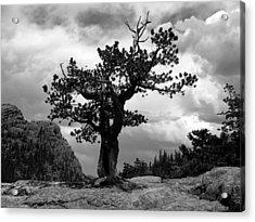 Storm Tree Acrylic Print