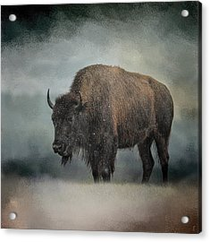 Stormy Day - Buffalo - Wildlife Acrylic Print by Jai Johnson