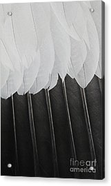 Stormy Feathers Acrylic Print by Judy Whitton