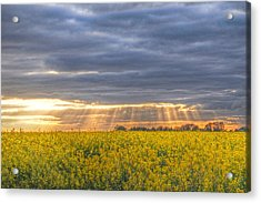Stormy Sunset Over Rapeseed Fields Acrylic Print