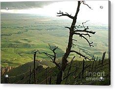 Stormy Tree Acrylic Print by Mary Carol Story