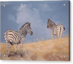Stormy Zebra Acrylic Print by Robert Teeling