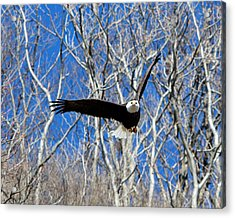 Acrylic Print featuring the photograph Straight On For You. by John Freidenberg