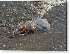 Stranded Jellyfish Acrylic Print