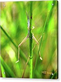 Acrylic Print featuring the photograph Strange Bug by Margaret Buchanan
