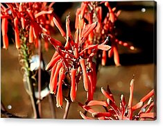 Acrylic Print featuring the photograph Strange Delight by Debra Forand