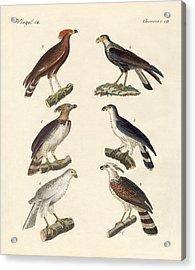 Strange Eagles Acrylic Print