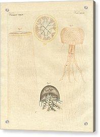 Strange Medusas Acrylic Print