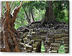 Strangler Fig Tree Roots On Preah Khan Temple Acrylic Print