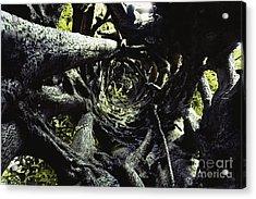 Strangler Fig Trunk Acrylic Print