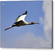 Stratostork Acrylic Print by Al Powell Photography USA