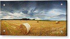 Straw Bales Pano Acrylic Print by Jane Rix