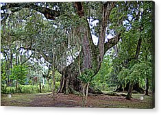Acrylic Print featuring the photograph Strawberry Chapel Oak by Linda Brown