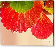 Strawberry Leaves Acrylic Print by Judy Via-Wolff