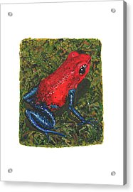 Strawberry Poison Dart Frog Acrylic Print
