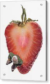 Strawberry Seat Acrylic Print