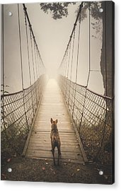 Stray Dog Acrylic Print