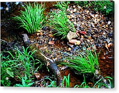 Acrylic Print featuring the photograph Stream By The Trail by Ludwig Keck