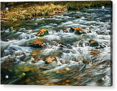 Stream Fall Colors Great Smoky Mountains Painted  Acrylic Print by Rich Franco