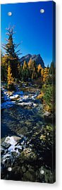 Stream Flowing In A Forest, Mount Acrylic Print