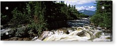 Stream Flowing Through A Forest, Little Acrylic Print by Panoramic Images