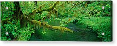 Stream Flowing Through A Rainforest Acrylic Print