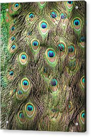 Acrylic Print featuring the photograph Stream Of Eyes by Diane Alexander