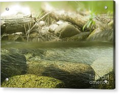 Stream Riffle Habitat Acrylic Print by William H. Mullins