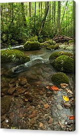 Acrylic Print featuring the photograph Stream With The Color Of Early Fall. by Debbie Green