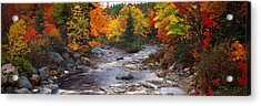 Stream With Trees In A Forest Acrylic Print