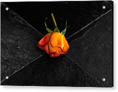 Acrylic Print featuring the photograph Street Rose by Marwan Khoury