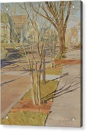 Street Trees With Winter Shadows Acrylic Print