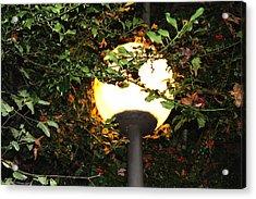 Streetlight Acrylic Print by Izabela Bienko