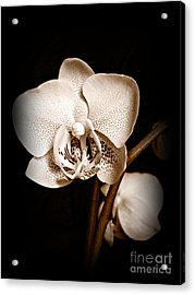 Strength And Beauty Sepia Acrylic Print