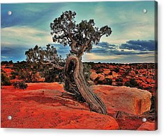 Strength Acrylic Print by Benjamin Yeager