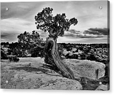 Strength Black And White Acrylic Print