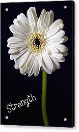Strength Acrylic Print by Kim Andelkovic