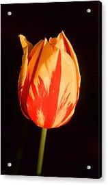 Strength Of A Flower Acrylic Print by Jonathan Michael Bowman
