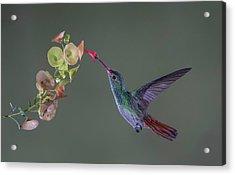 Stretch Acrylic Print by Greg Barsh