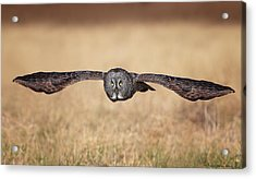 Stretched Out Acrylic Print by Daniel Behm
